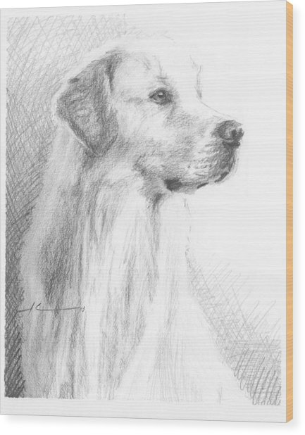 Yellow Labrador Show Dog Pencil Portrait Wood Print by Mike Theuer