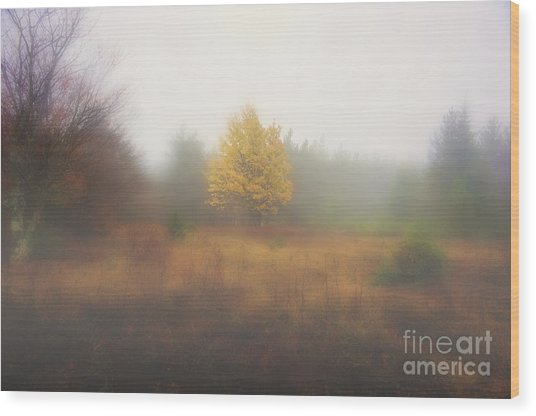 Yellow Leaves Of Tree In Fog At Dolly Sods Wood Print by Dan Friend
