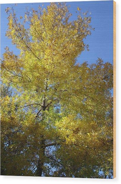 Yellow Maple Tree Wood Print by Michel Mata