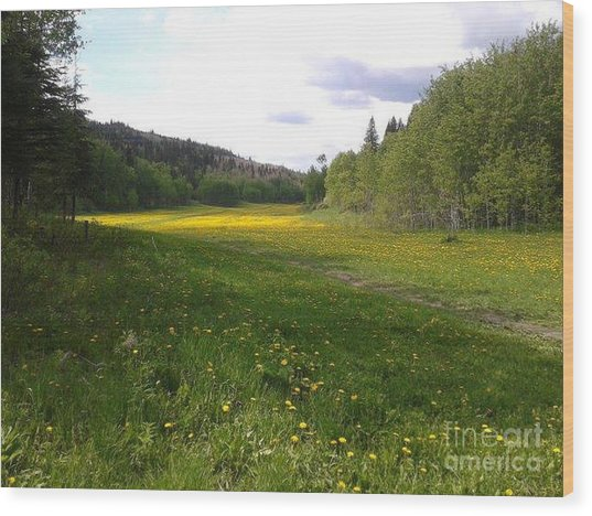 Yellow Meadow Wood Print