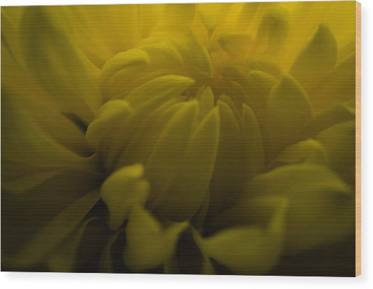 Yellow Mum Wood Print