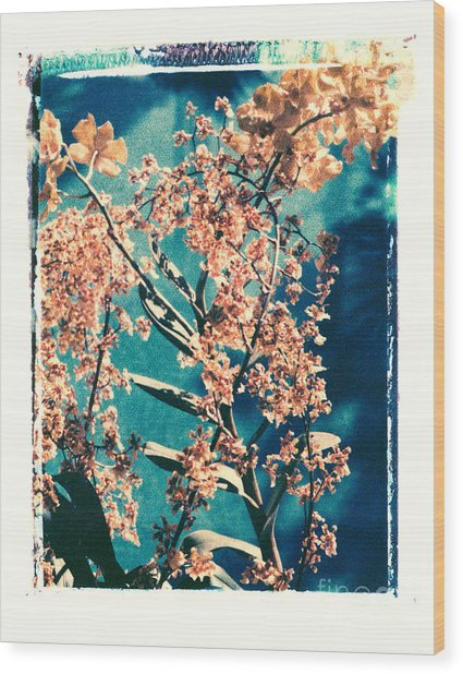 Yellow Orchids Wood Print by Deborah Gray Mitchell
