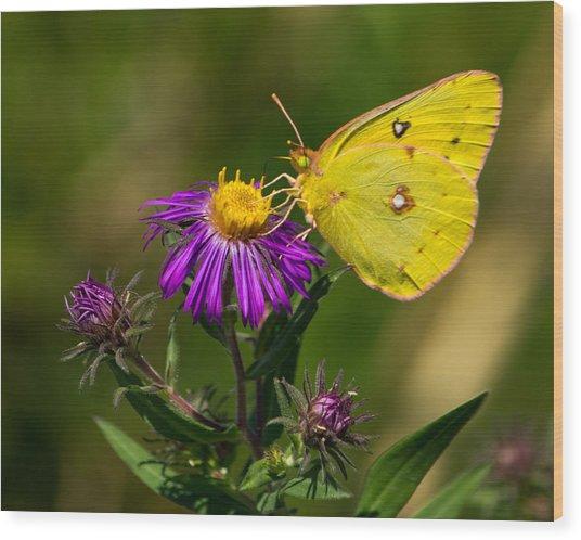Yellow Over Purple Wood Print