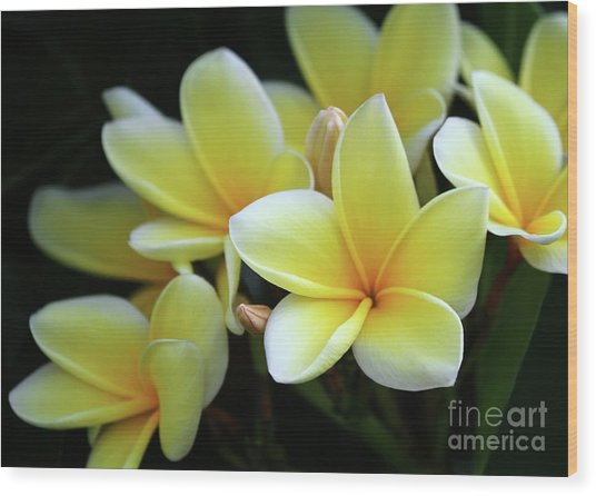 Yellow Plumeria Cascade Wood Print