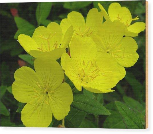 Yellow Primrose Wood Print