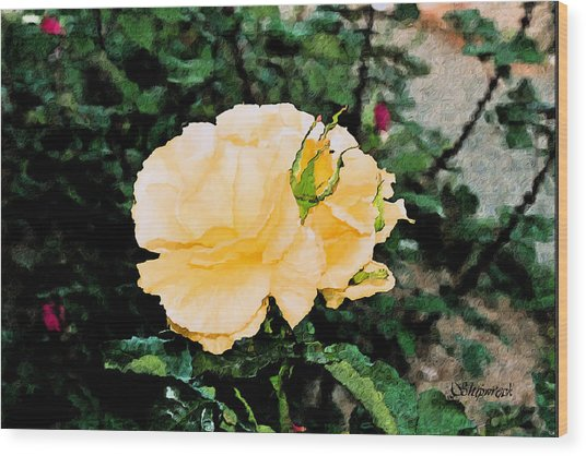 Yellow Rose And Bud Wood Print by Christopher Bage