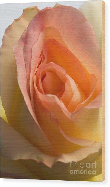 Yellow Rose Bud Wood Print
