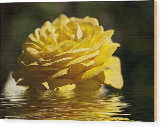 Yellow Rose Flood Wood Print