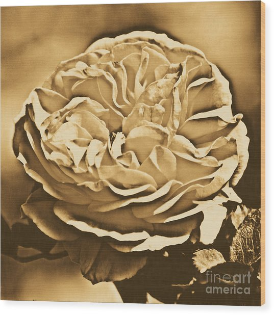 Yellow Rose Of Texas Floral Decor Square Format Rustic Digital Art Wood Print