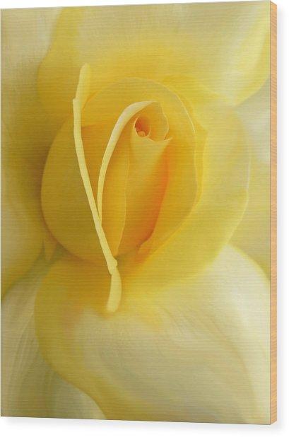 Yellow Rose Portrait Wood Print