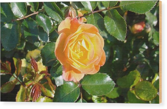 Yellow Rose Wood Print by Van Ness