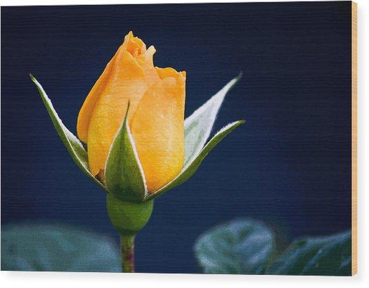 Yellow Rosebud Wood Print