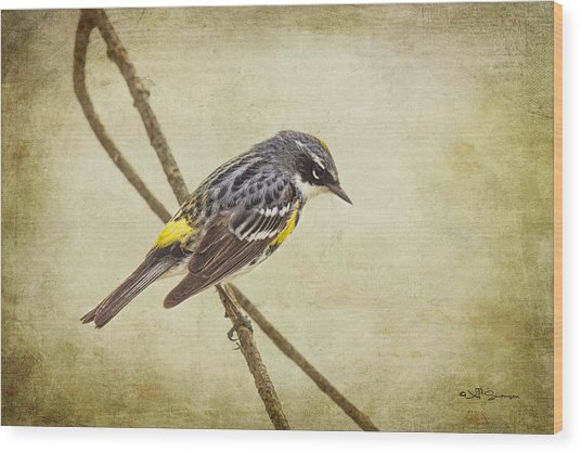 Yellow-rumped Warbler 2 Wood Print by Jeff Swanson
