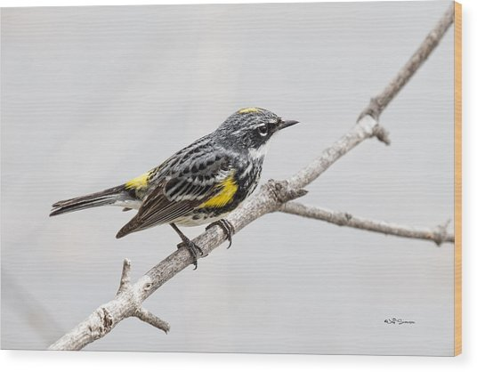 Yellow-rumped Warbler 3 Wood Print by Jeff Swanson
