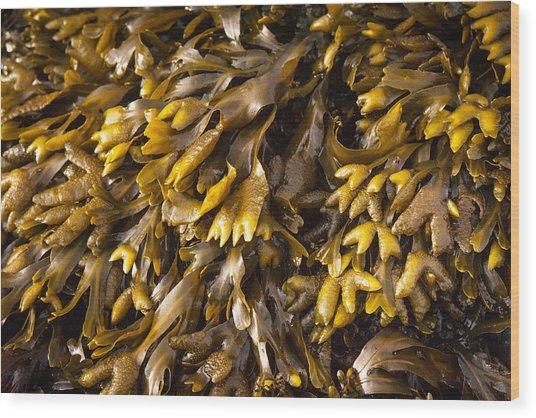 Yellow Sea Plant Wood Print