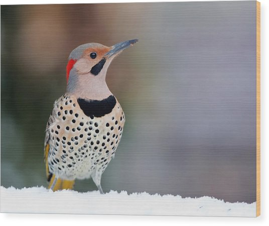 Yellow Shafted Flicker In Snow Wood Print