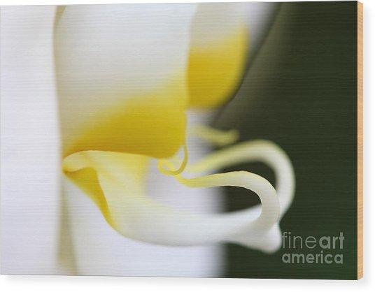 Yellow Splash Wood Print