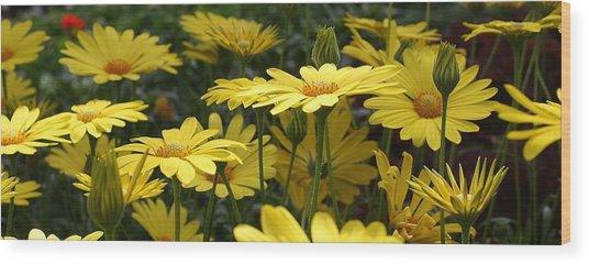 Yellow Splendor Wood Print