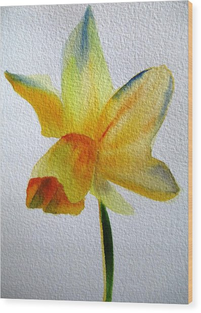 Yellow Spring Daffodil Wood Print by Sacha Grossel
