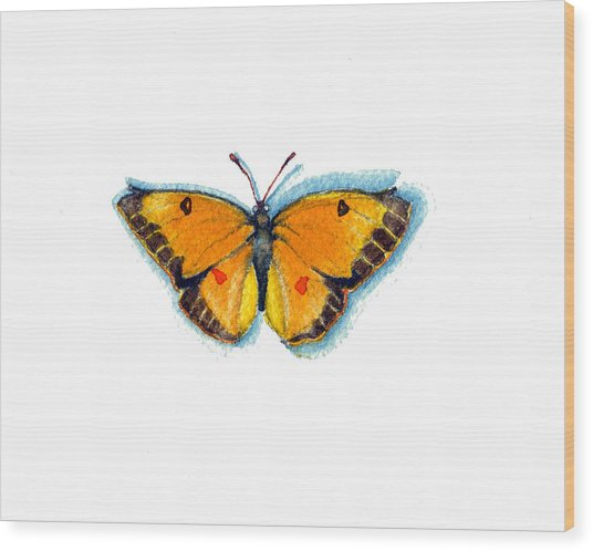 Yellow Sulphur Wood Print