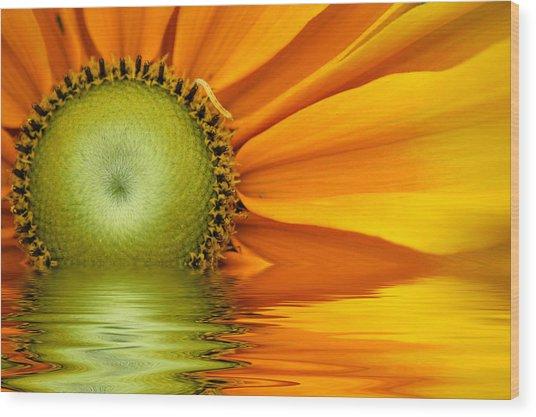 Yellow Sunflower Sunrise Wood Print
