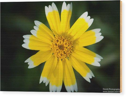 Yellow Sunshine  Wood Print
