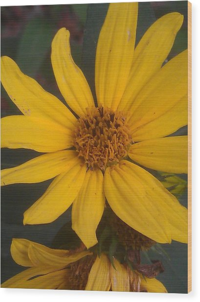 Yellow Sunshine Wood Print by Kim Martin