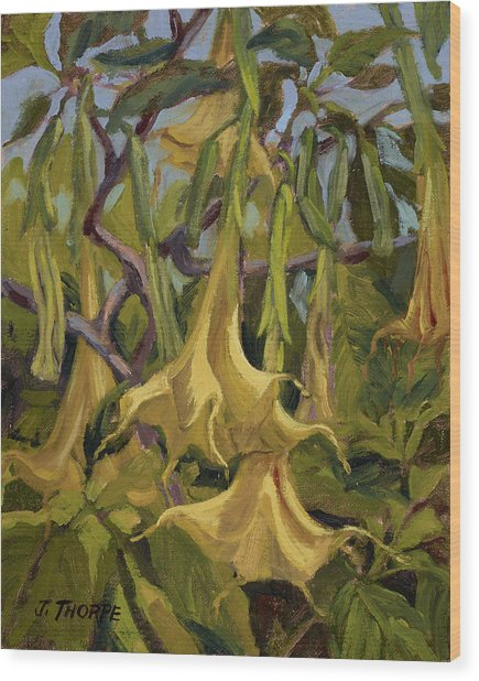 Yellow Trumpets Wood Print