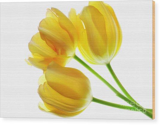 Yellow Tulips Wood Print by Charline Xia