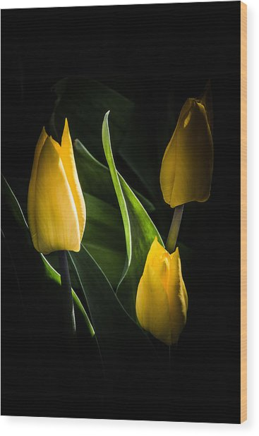 Yellow Tulips Wood Print