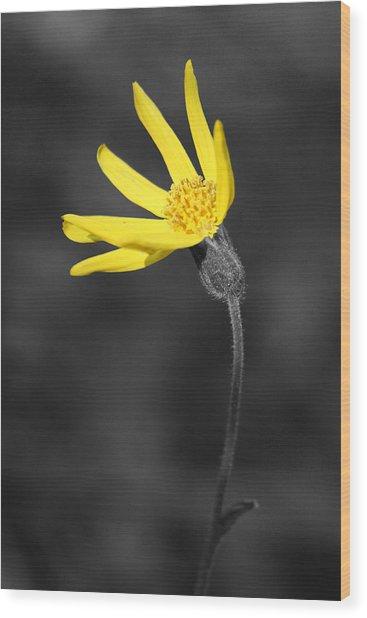 Yellow Wildflower Wood Print