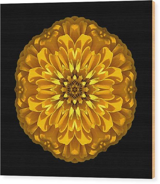 Yellow Zinnia Elegans Flower Mandala Wood Print