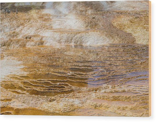 Yellowstone Gold Wood Print