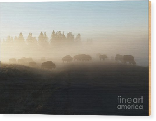 Yellowstone Bison In Early Morning Fog Wood Print