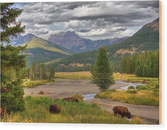 Yellowstone Bison Wood Print by Michael H Spivak