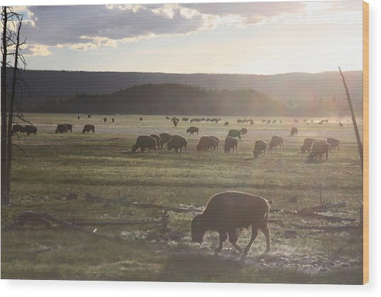 Yellowstone Bison Near Lower Geyser Basin Wood Print