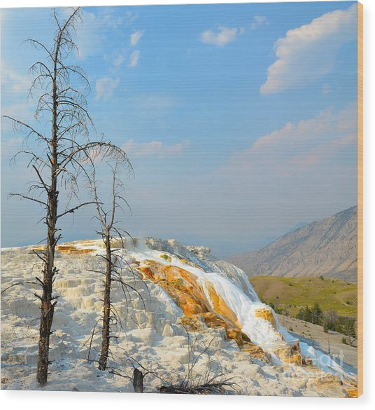 Yellowstone Canary Spring Wood Print
