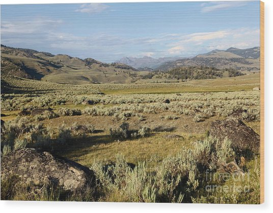 Yellowstone Landscape Wood Print by Sophie Vigneault