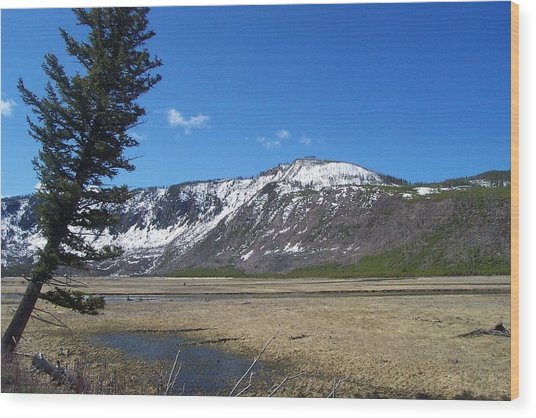 Yellowstone Park Beauty 1 Wood Print