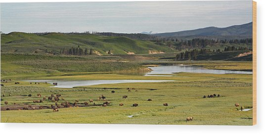 Yellowstone River In Hayden Valley In Yellowstone National Park Wood Print