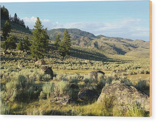 Yellowstone Scenery Wood Print by Sophie Vigneault