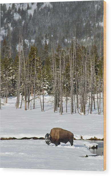 Yellowstone Winter Wood Print