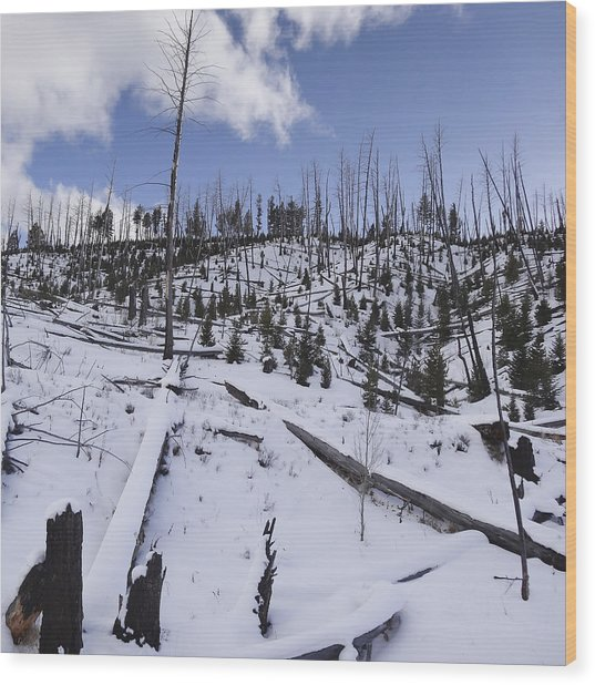 Yellowstone Winter Wood Print by David Yack