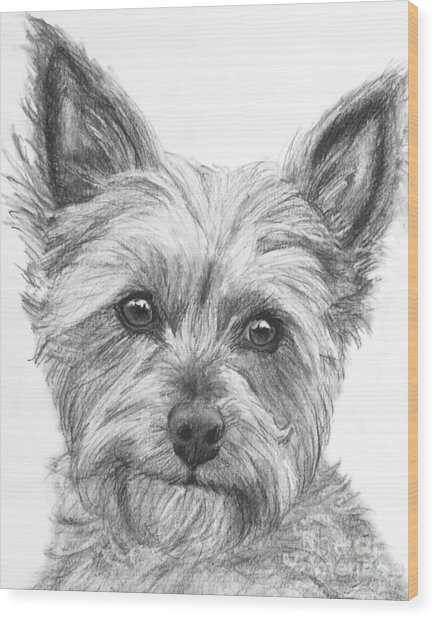 Yorkie Drawing Wood Print