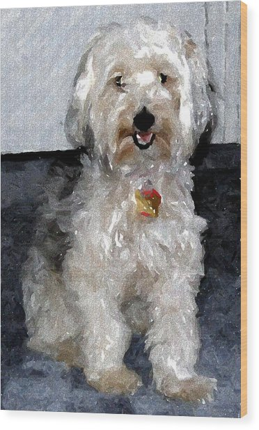 Yorkipoo Dog Wood Print by Olde Time  Mercantile