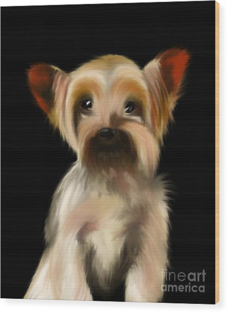 Yorkshire Terrier Pup Wood Print