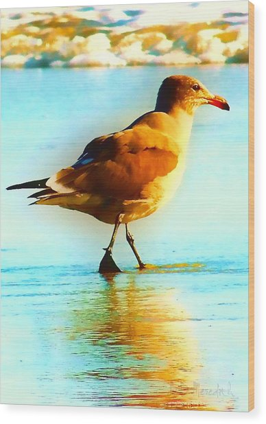 You Are The Only Gull For Me Wood Print by Brian D Meredith