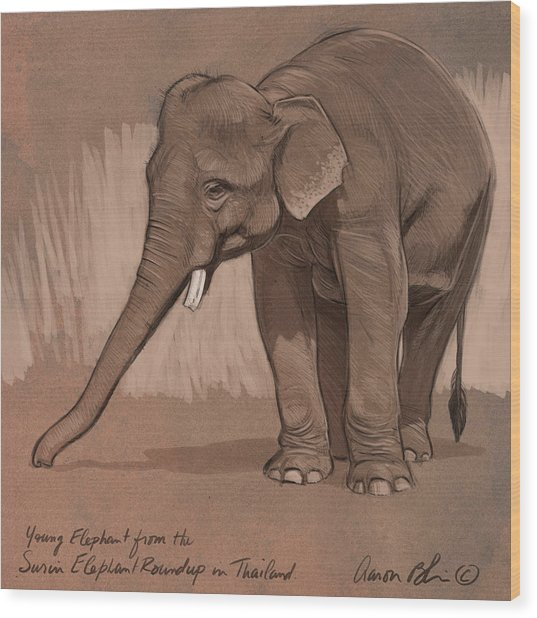 Young Asian Elephant Sketch Wood Print