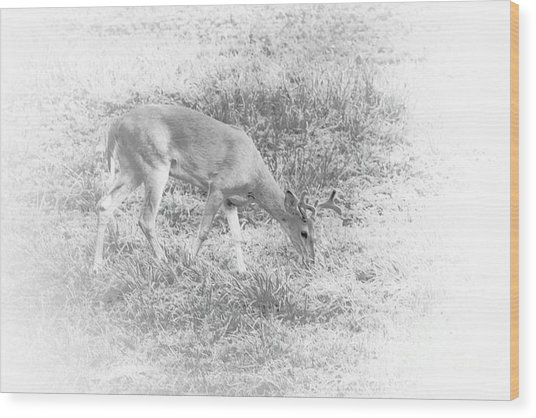 Young Buck Wood Print
