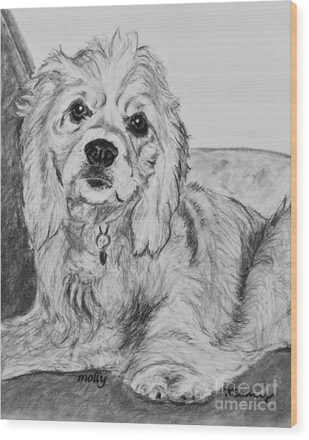 Young Cocker Spaniel Wood Print
